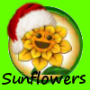 Sunflowersxmas